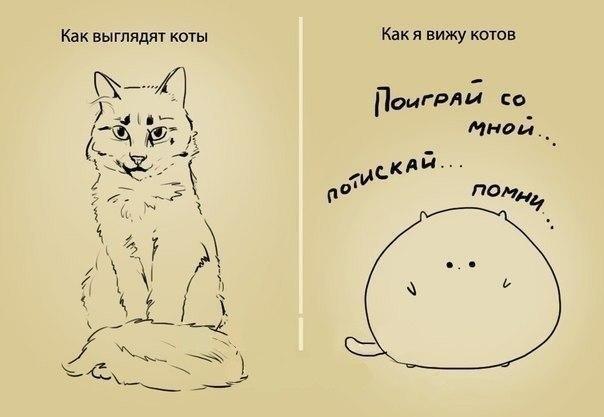 Прикольная картинка про кота