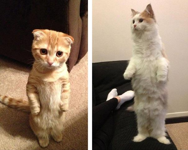 Котейки эволюционируют