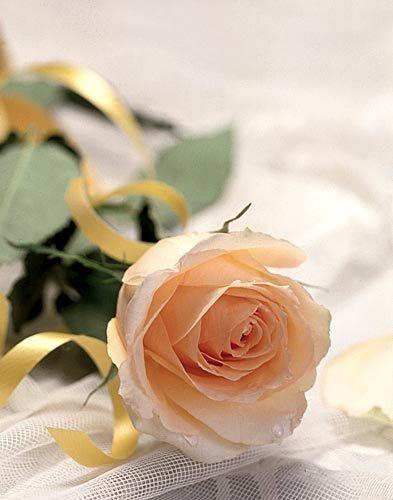 Роза для любимой