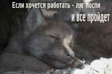 Работа не волк...