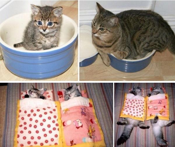 Котики выросли