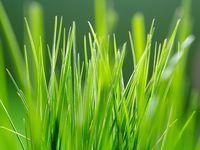 Летняя зелень