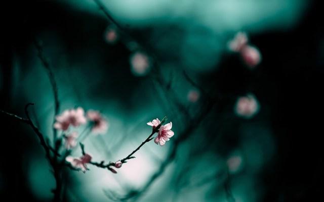 Цветущие ветки