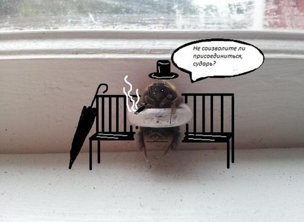"""Смешные фотожабы """"Шмель застрял в окне"""""""