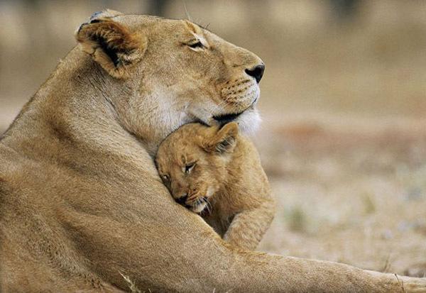 Мамина любовь самая горячая