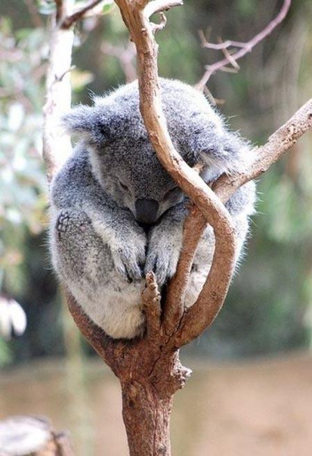 Позитивные коалы