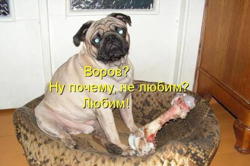 Котоматрицы про собак