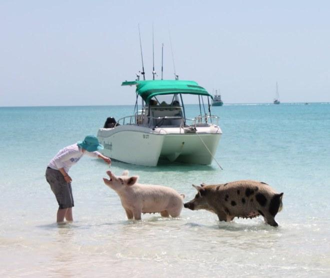 Незвичайний туризм: Острів плаваючих свинок