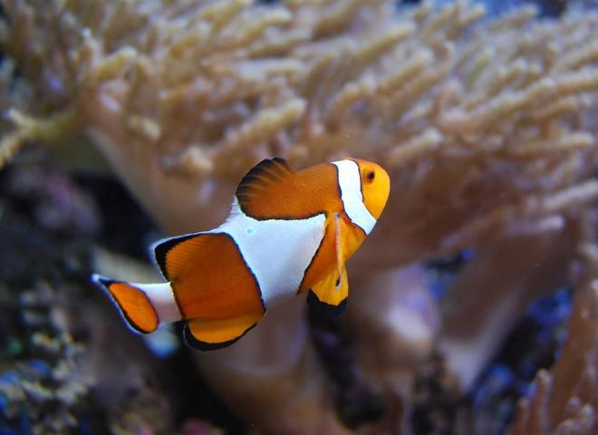 Риба та стрункість по-морському