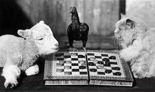 """""""Человечные"""" животные"""