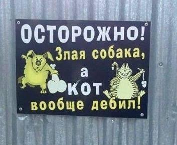 Осторожно, кот - дебил!
