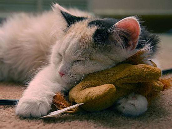 Спящие няшки