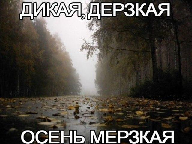 приколы фото осень