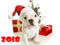 С годом собаки 2018