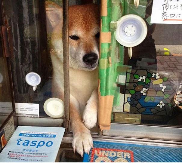 Лучший работник в Токио