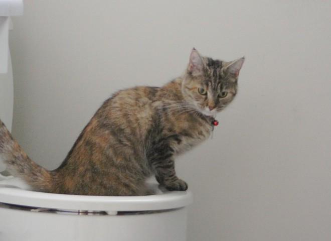 Кішка паскудить будь-де? Чому?