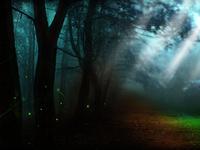 Луч света в темном лесу