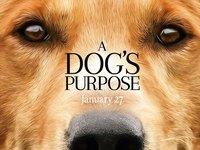 Собачья жизнь. Обои