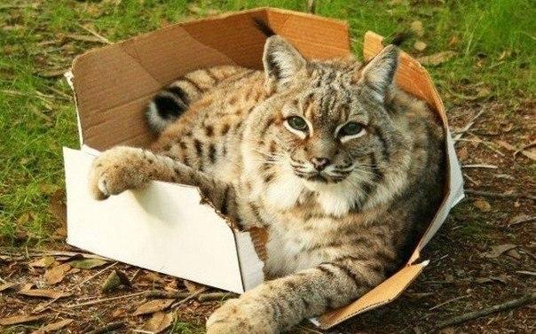 Все котики без ума от коробок