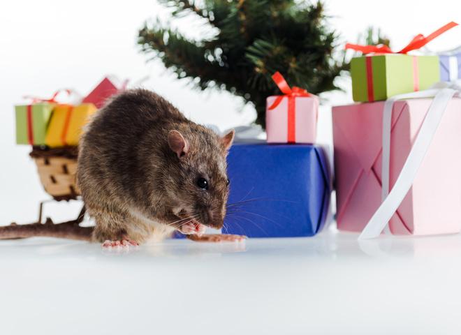 Узнай, что тебя ждет в год Белой Крысы