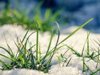 Трава и снег
