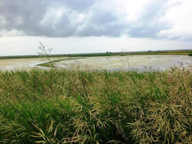 Летний отдых в Украине: Аскания-Нова - оазис посреди дикой степи