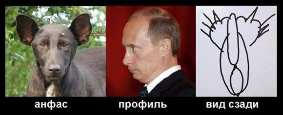 Собака и кошка, похожая на Путина