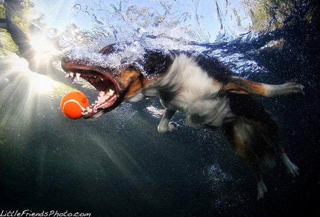 Подводные песики