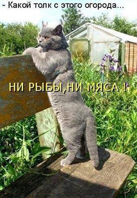 Прикол про кота и огород