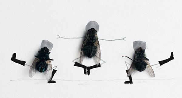 Веселая бытовуха мух