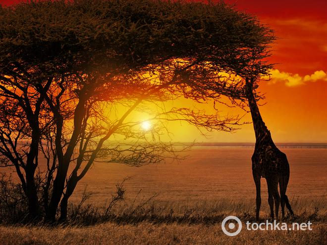 10 стран, которые обязательно стоит посетить. ЮАР