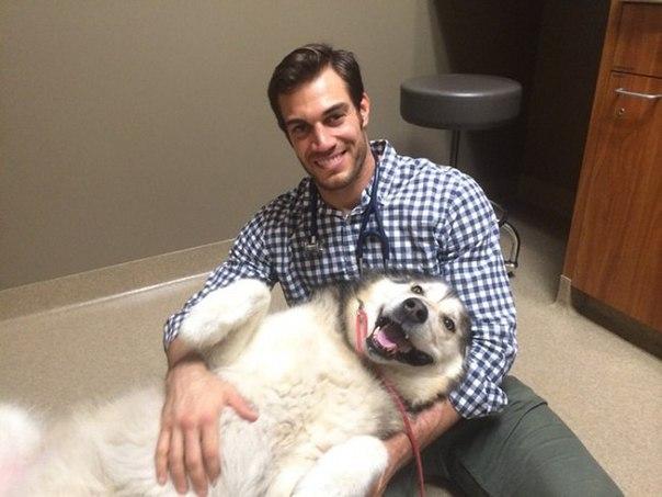 Ветеринар, которого очень любят животные
