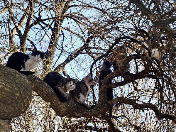 Весна в пути. Коты прилетели