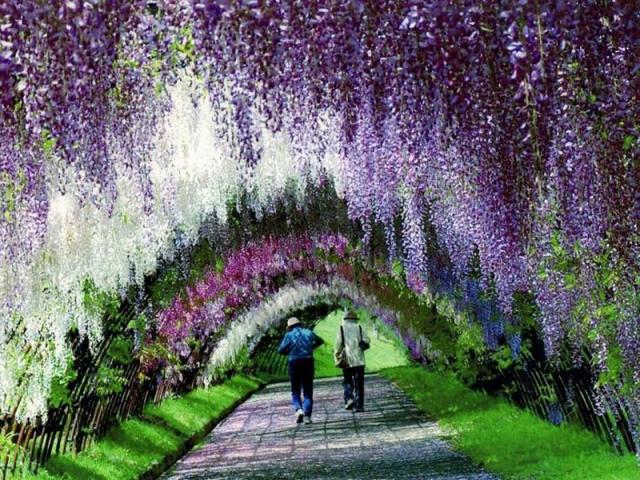 Тунель з квітів Японії: подорож у казку