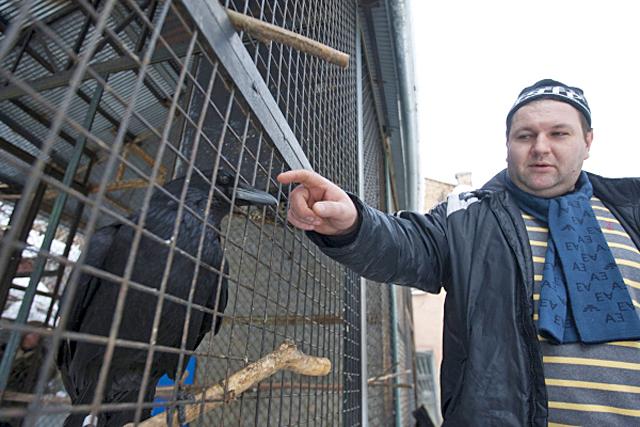 Гід по Києву: дворик з воронами в Києві