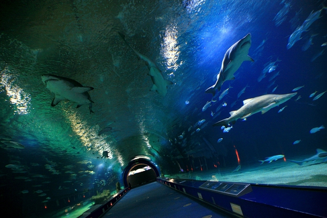 Цікаві місця Валенсії: акваріум L'Oceanografic
