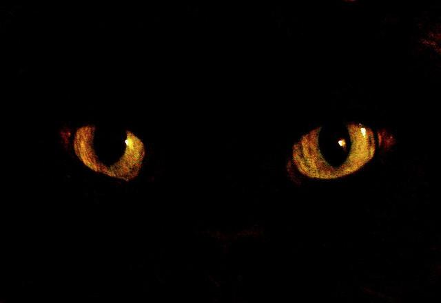 Осторожно! Черный кот