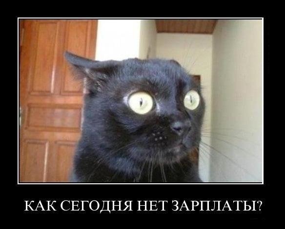 Демотиватор про котэ