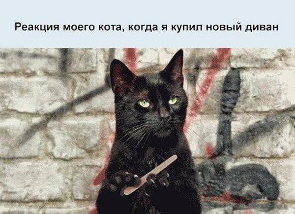 Позитивная фотка с котэ