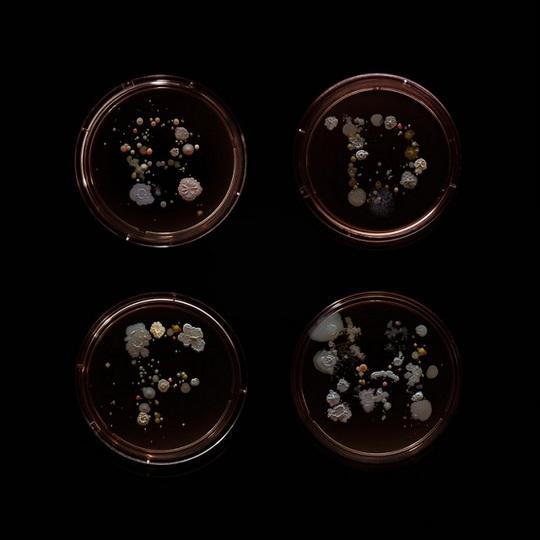 Картини з бактерій