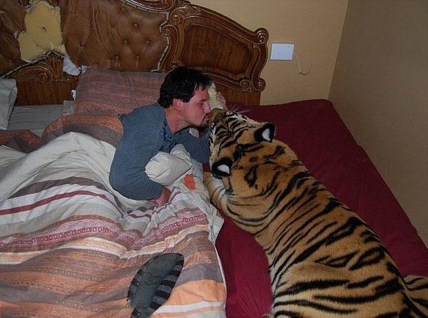Домашний котик - бенгальский тигренок Enzo!