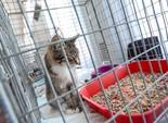 Твори добро: 43 кота обрели новый дом (фото)