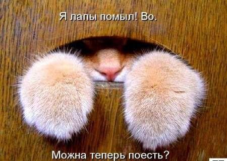 Смешные коты