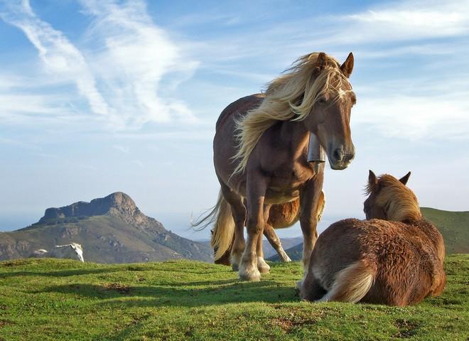 Лошади: исцеление и вдохновение