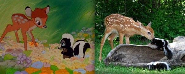 Диснеевские животные в реальной жизни