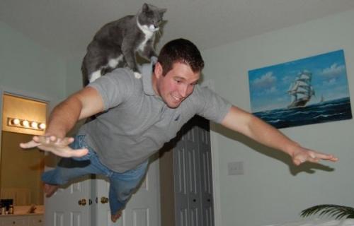 Магия котов