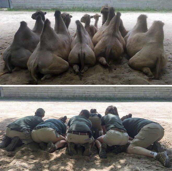 Когда у работников зоопарка много свободного времени...