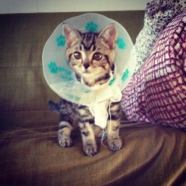 """Кошка-инопланетянка, которая """"взорвала"""" Интернет"""