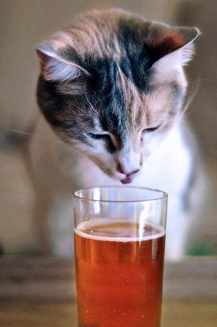 Приколы про котов пивоманов