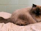 Животные-путешественники: кот Клайд